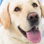 Banca del sangue canino IZSVe: esprimi la tua opinione
