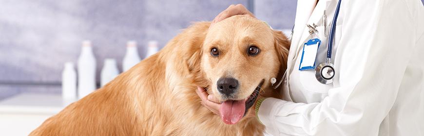 Banca del sangue canino: per i veterinari