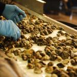 Centro di referenza nazionale / OIE per le malattie dei pesci, molluschi e crostacei
