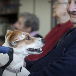 Centro di referenza per gli interventi assistiti con gli animali (pet therapy)