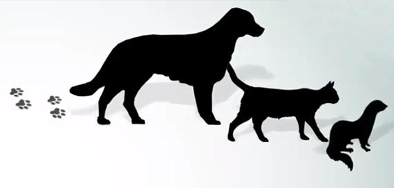 Corso FAD / Movimentazione a fini non commerciali di animali da compagnia