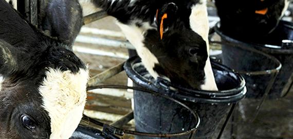 corso-fad-impiego-farmaco-allevamento-bovino-slider