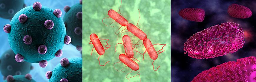 Malattie e patogeni