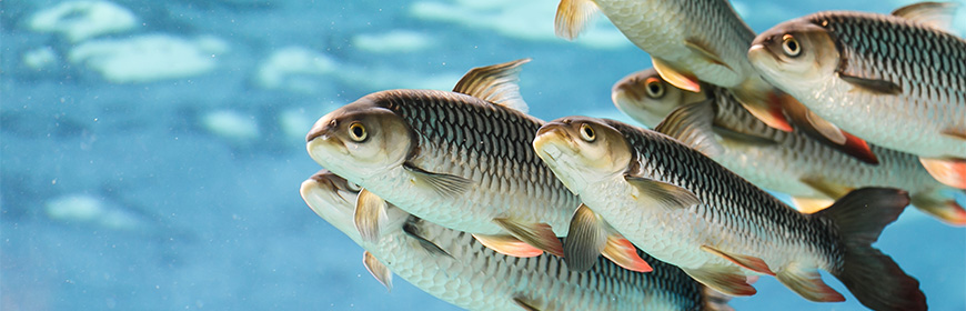 Pesci, molluschi e crostacei