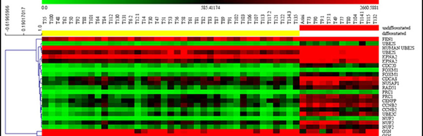 Caratterizzazione biomolecolare del mastocitoma cutaneo del cane