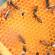 Aethina tumida in Italia: la situazione epidemiologica