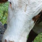 Pubblicata la relazione tecnica dell'IZSVe per l'anno 2013