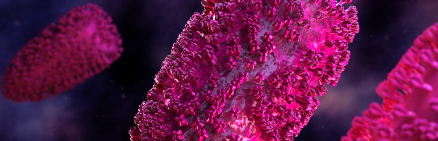 Virus rabbia nell'uomo, convegno ECM su tecniche diagnostiche, profilattiche e terapeutiche