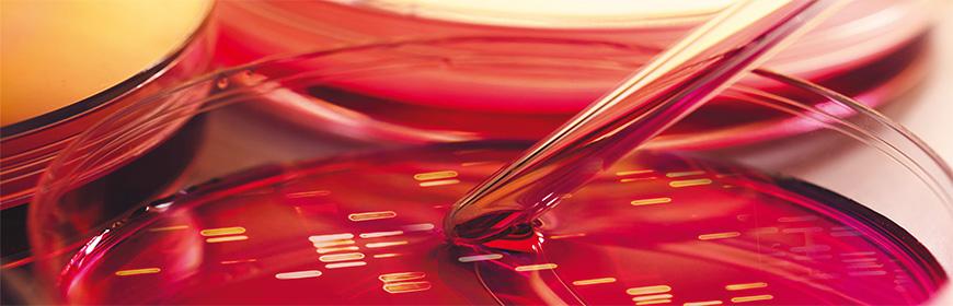 Corso ECM / Metodi innovativi per la caratterizzazione dei patogeni alimentari