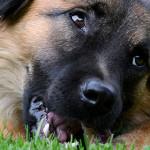 Avvelenamenti animali: i dati del Triveneto nel triennio 2011-2013