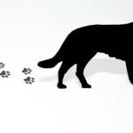 Corso ECM FAD / Movimentazione a fini non commerciali di animali da compagnia. Reg. (UE) 576/2013 e Reg. (UE) 577/2013