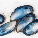 Come acquistare e cucinare i molluschi bivalvi [linee guida]