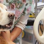 Indagine nazionale sulla pet therapy