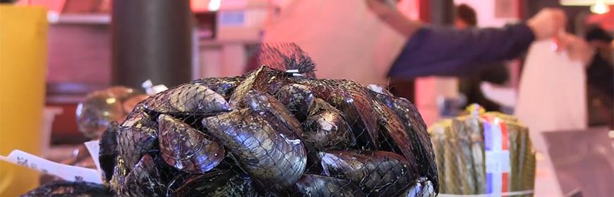 Molluschi bivalvi: per un consumo senza rischi [video]