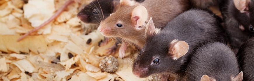 Sperimentazione con gli animali. Linee guida per la presentazione di un progetto di ricerca al Ministero della Salute