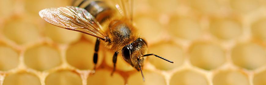 Anagrafe apistica nazionale: approvato il manuale operativo