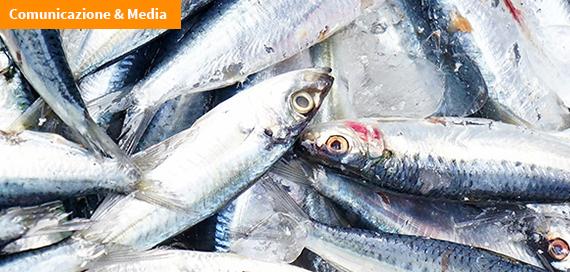Appunti di scienza: Anisakis e parassitosi nei pesci