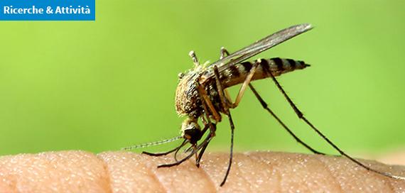 """Contro le zanzare invasive si mette in campo il """"porta a porta"""""""