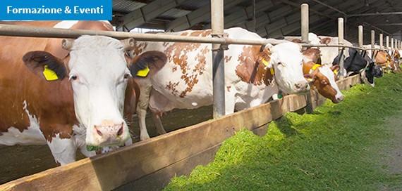 Corso ECM FAD / ABC della BVD. Saper gestire la patologia negli allevamenti di bovini