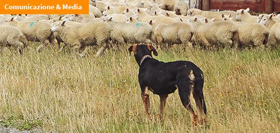 Echinococcosi, un rischio per la salute del cane e dell'uomo (video)