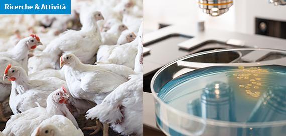 E. coli produttori di enzimi che conferiscono resistenza agli antibiotici. Quanto sono diffusi?