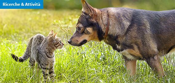 Leptospirosi in cani e gatti. La circolazione in Italia e l'efficacia di metodi diagnostici e vaccini