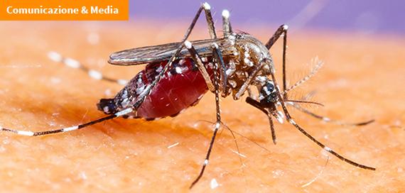 Zanzara tigre: come evitare il rischio di punture