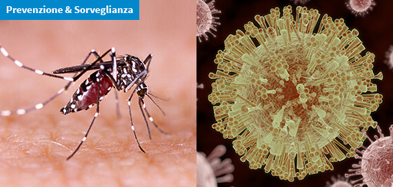 Malattie trasmesse da vettori: il caso Zika virus