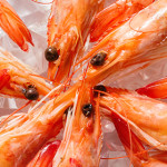 Vibrioni nei crostacei: i rischi per il consumatore