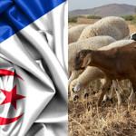 Gemellaggio IZSVe – Algeria: un sostegno ai servizi veterinari per valorizzare le produzioni nazionali algerine