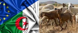 Gemellaggio IZSVe - Algeria: un sostegno ai servizi veterinari per valorizzare le produzioni nazionali algerine