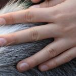 Seminario giustizia e mediazione animale: il CRN per gli interventi assistiti a Lione