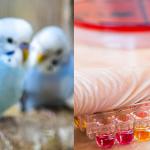 La gestione del campione per esami diagnostici nei pet birds