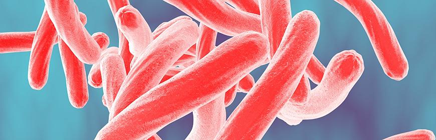 Salmonella. Pubblicati i report Enter-Vet 2011-2012 e 2013-2014
