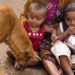 Il Centro di referenza FAO per la rabbia supporta la campagna End Rabies Now