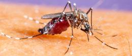 La zanzara tigre: come evitare il rischio di punture