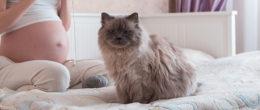 Toxoplasmosi: il gatto è davvero un rischio per la gravidanza?