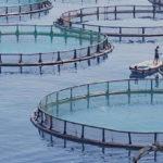 L'Istituto Zooprofilattico Sperimentale delle Venezie ad Aquafarm – Pordenone, 26-27 gennaio 2017