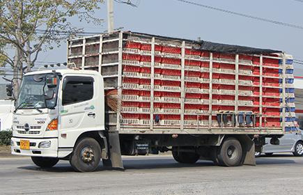 Camion trasporto avicoli