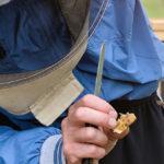 BPRACTICES, buone pratiche di allevamento per migliorare la salute delle api
