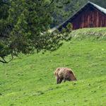 Il ruolo chiave dei centri di raccolta della selvaggina per la sorveglianza sanitaria
