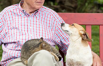 venti assistiti con il cane nelle case di riposo in Europa