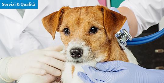 Aggiornato l'elenco degli esami di laboratorio per animali da compagnia