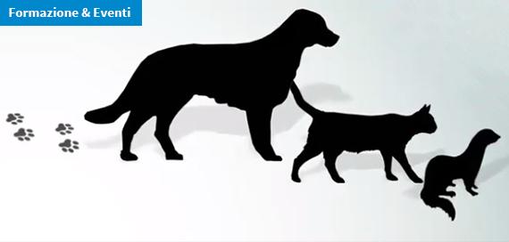 corso-ECM-Corso ECM FAD / Movimentazione a fini non commerciali di animali da compagnia. Reg. (UE) 576/2013 e Reg. (UE) 577/2013-animali-ministero-salute1-slider