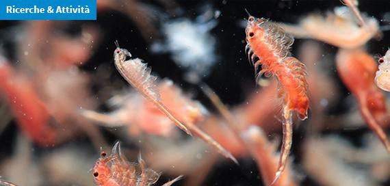 Geni di antibiotico resistenza ai sulfamidici nel plancton degli oceani