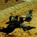 Linee guida in Veterinaria: la Neosporosi bovina