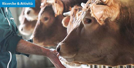 Ricercatori IZSVe premiati per studio sugli effetti del clenbuterolo nel fegato bovino