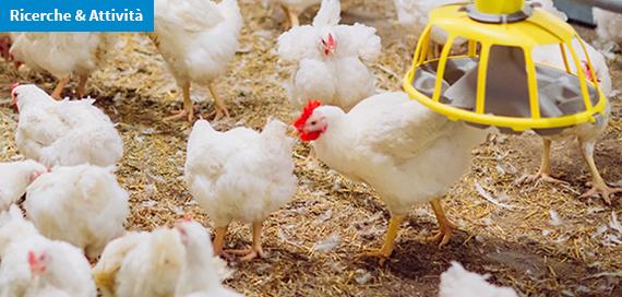 Virus dell'influenza aviaria ad alta patogenicità rilevati in Italia nel biennio 2016-2017