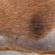 Micosi e dermatofiti, i funghi della pelle che colpiscono gli animali e l'uomo [video]