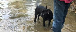Sei un medico veterinario e ti occupi di animali da compagnia? Collabora alla nuova ricerca IZSVe sulla leptospirosi nei cani